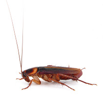 cockroach.page